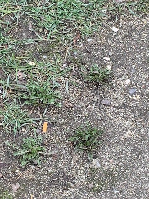 plogging-nürnberg-zigarettenstummel